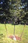 judy_tree_6